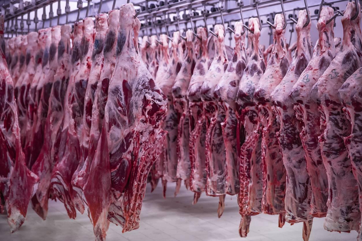 séparation mécanique viande